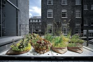 Pocket Habitat by Arup – Umrüstung von Kiesdächern zu begrünten Dächern