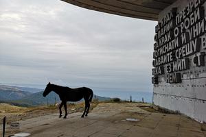 Wildpferd vor dem Buzludzha-Monument