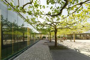 Ein großes Anliegen der Architekten war es, den Bestand aus einem Platanen-Gründach zu schonen und zu erhalten
