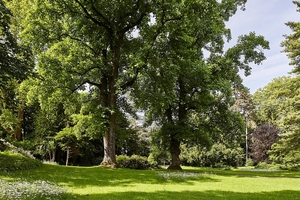 Der Iselin-Weber-Park, noch allein mit seinem schönen alten Baumbestand