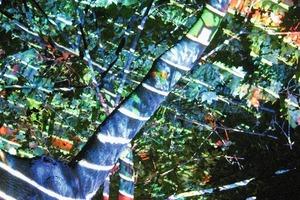 """""""Verwandelt in bunter Schönheit"""": Eine Projektion macht den Baum zu einem spielerischen, bunten, lebhaften Ort. Die Schichtung der Äste und Blätter zerstreut das Bild wie ein Puzzle auf dem Baum<br />"""