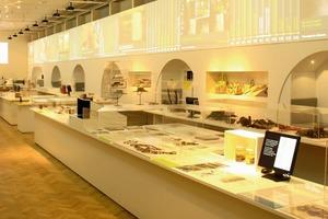 Das Labor als Studie zur Anschauung im Schinkel-Museum zeigt, wie Humboldt und seine Nachfahren in unsere Welt heute passen könnten<br /><br />