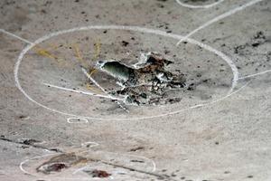 Markierte Schadstelle im Beton mit freiliegenden Bewehrungseisen an einer Brückenunterseite