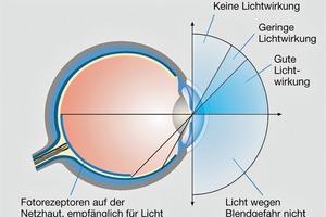 Die Ganglienzellen des dritten Lichtrezeptors sind im nasalen und unteren Bereich der Netzhaut am empfindlichsten. Damit hat sich das Auge an die natürlichen Lichtverhältnisse angepasst, denn Tageslicht erreicht das Auge aus dem oberen Halbraum