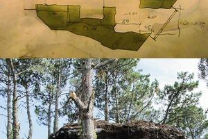 Oben: Grundriss, wohl auf Pergament gemalt; darunter: der Trüffel ist ausgegraben<br />