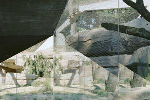 Leopardengehege, Tierpark Dählhölzli Bern