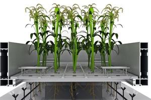 Detail Pflanzenmodul<br />