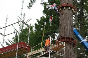 Drei Stahlkränze stellen die Verbindung von Baumstamm und den konstruktiven Bindern sicher