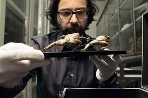 """Berlinale Jurybegündung: """"Dem Regisseur gelingt ein informativ-witzig-intelligenter Blick hinter die Kulissen eines großen Museums, das sich im internationalen Wettbewerb behaupten muss."""""""