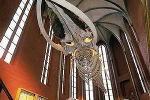Meeresmuseum, Stralsund - Wolfgang Warnkross, Stralsund